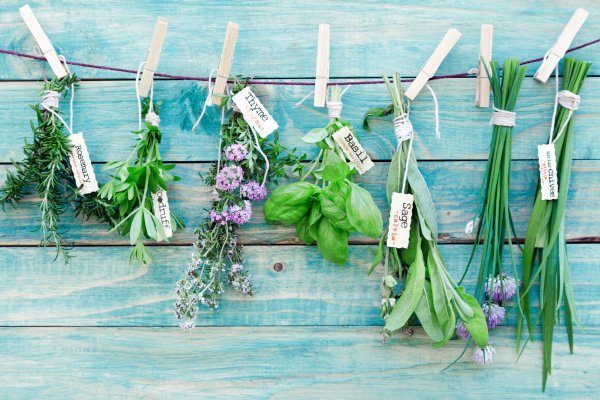 therapeutic herbs rosemary woodruff thyme basil sage chives